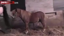 Милф с внушительных размеров попочкой завела коня до оргазма порево зоо в хорошем качестве HD