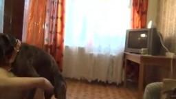Dog sex развращенная росийская извращенка сношается с псиной порнозоо частное видео