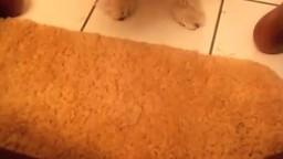Длинношерстный белый пес лижет влагалище черной зоофилке зоопорно личное
